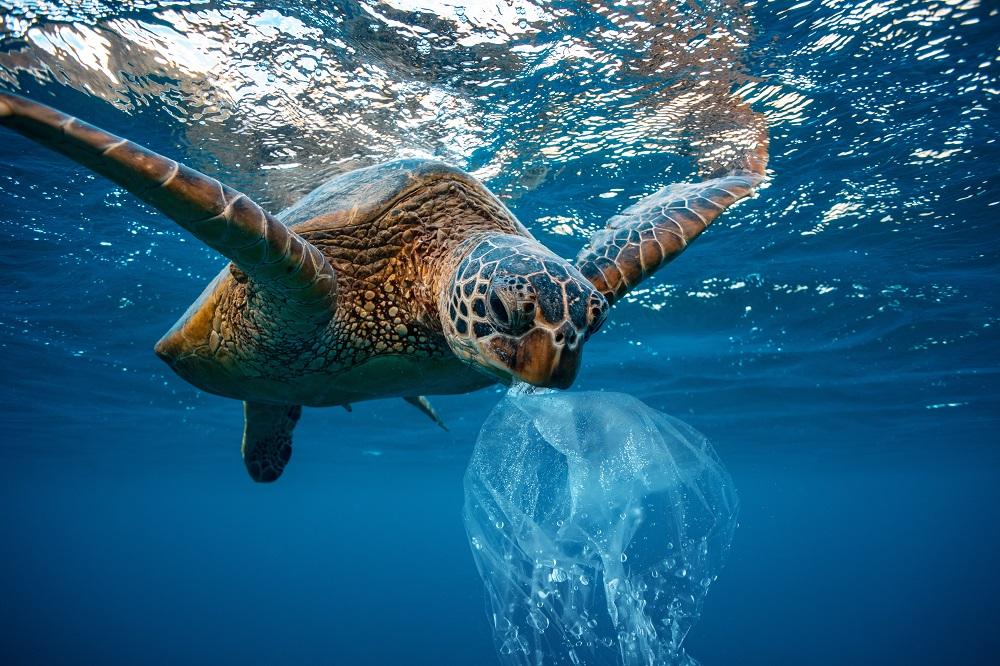 海洋プラスチック問題とは?改善のためにできること。